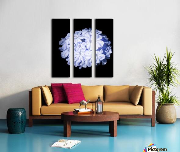 Blue Plumbago Split Canvas print