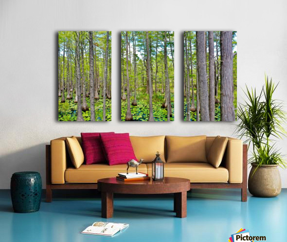 Swamp Cyp Dunes Split Canvas print