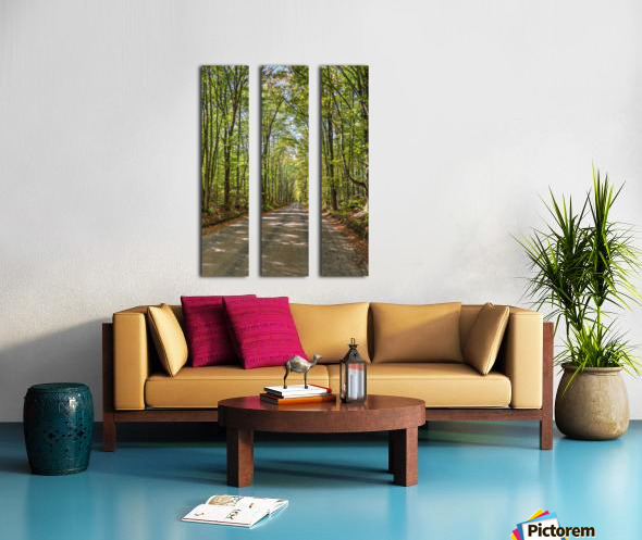 Road Less Traveled Split Canvas print