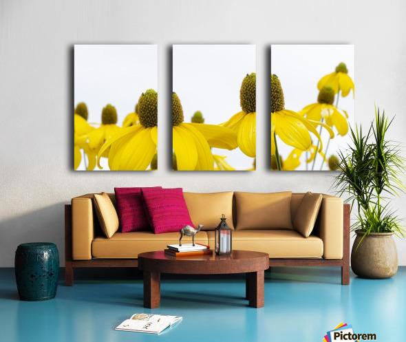 Sunshine Panorama Split Canvas print
