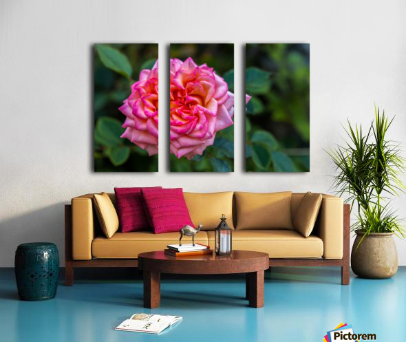 Rose Split Canvas print