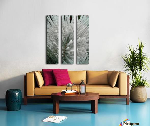 White Pine branch  Split Canvas print