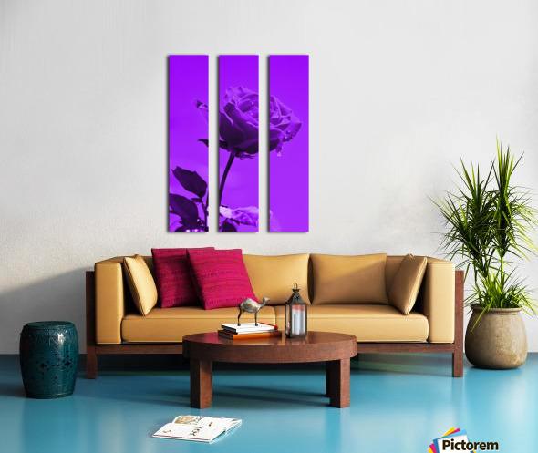 Love Rose purple 8665 Split Canvas print