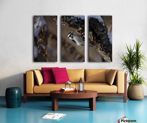 Downy on a Branch Split Canvas print