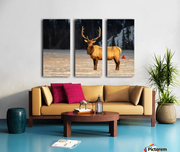 Bull Elk Split Canvas print