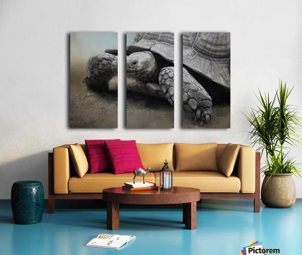 Galapagos Gentle Giant  Split Canvas print