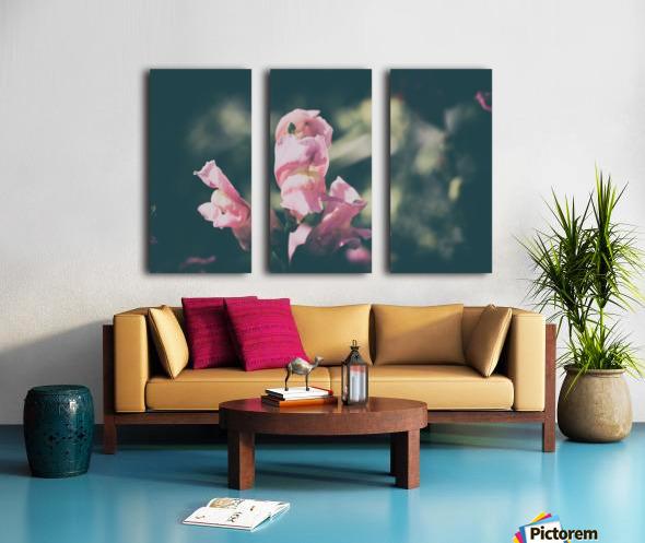 Lupinus Luteus Pink Split Canvas print