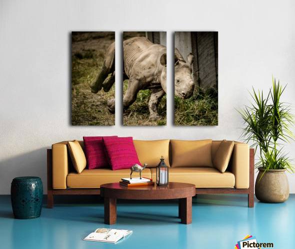 Baby Rhino Split Canvas print