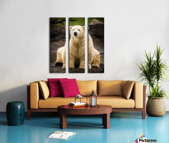 Polar Bear Cub Split Canvas print