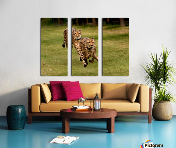 The Cheetah Brothers Split Canvas print