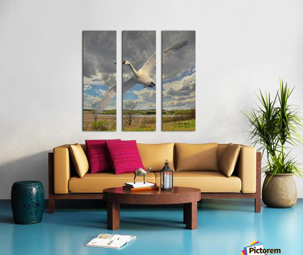Swan on the Wing Split Canvas print