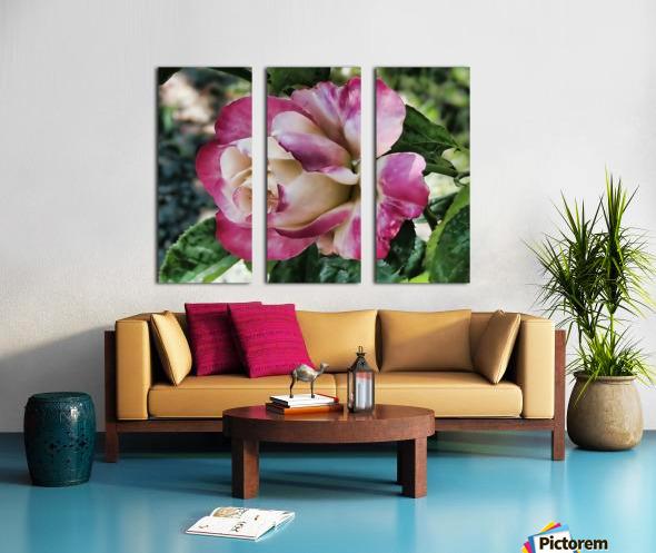 Lavender Rose Split Canvas print