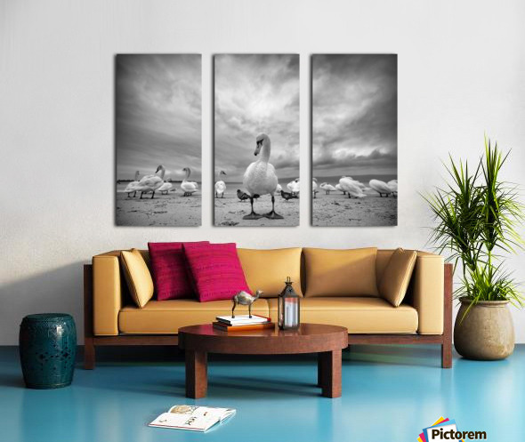 Swans on a winter beach Split Canvas print