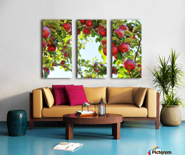 Apples Orchard- Harvest Split Canvas print
