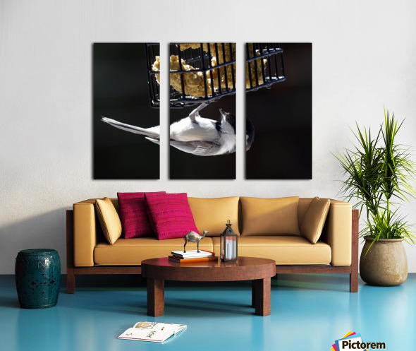Acrobate Split Canvas print