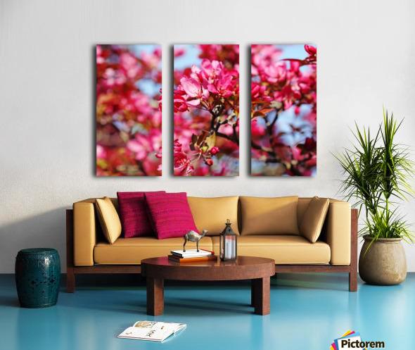 Crabapple Pink Split Canvas print