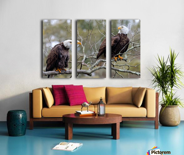 Bald Eagles Split Canvas print