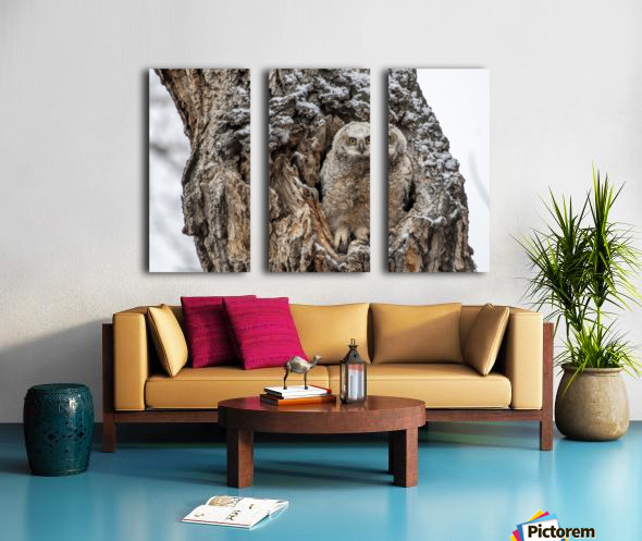Great Horned Owlet - Can I come out yet Split Canvas print