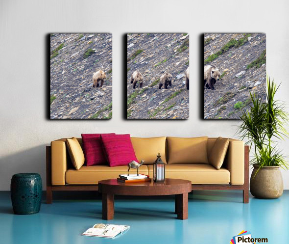 Grizzly Bear Family - Walk this way. Split Canvas print
