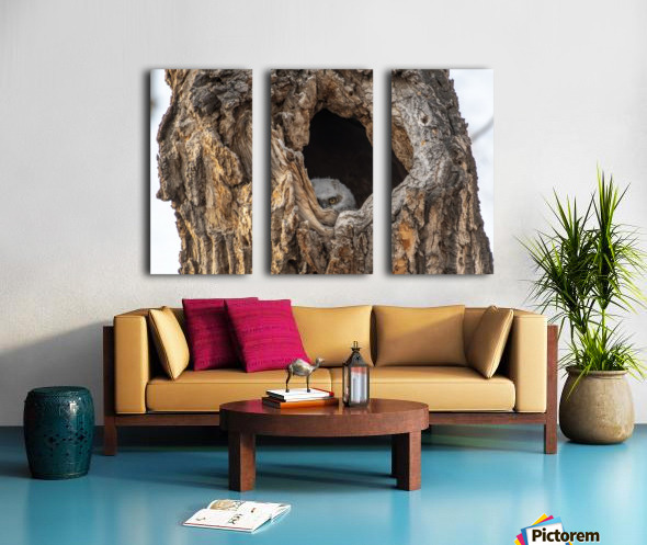 Great Horned Owl - Peek a boo Split Canvas print