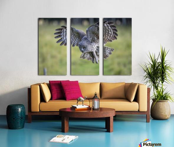 Great Grey Owl - Incoming Split Canvas print