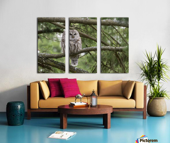 Barred Owl - Eye Contact Split Canvas print