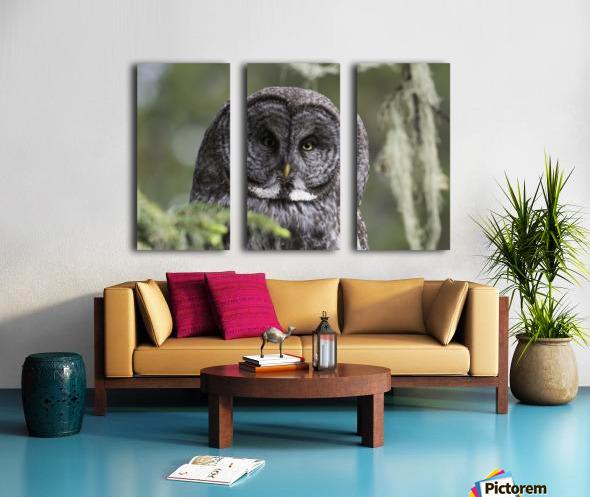 Great Grey Owl - Eye to Eye Split Canvas print