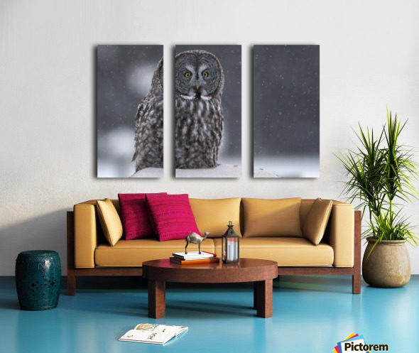 Great Grey Owl - Hunting at Sunset Split Canvas print