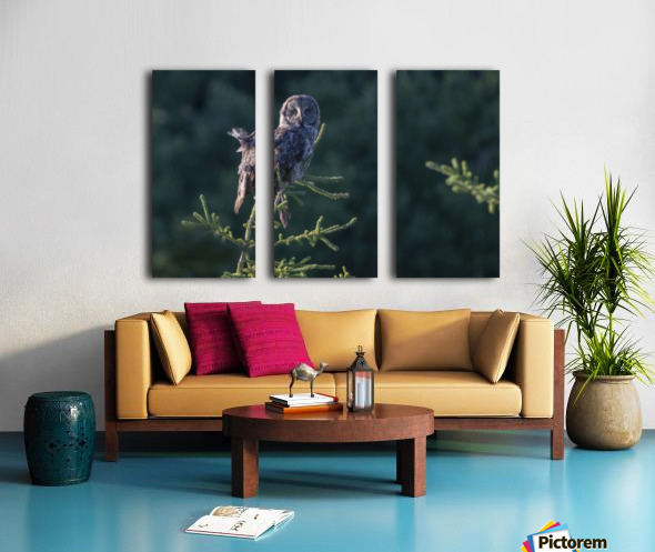 Great Grey Owl - Tree Top Hunting Split Canvas print