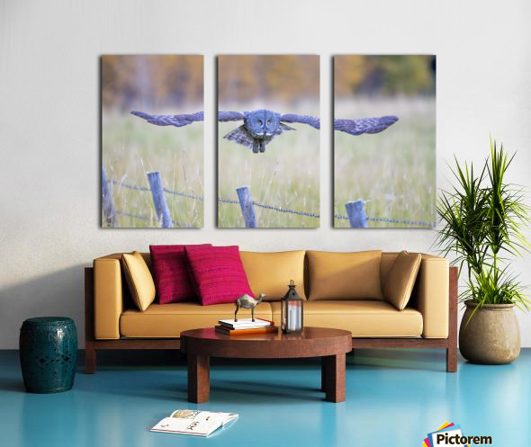 Great Grey Ow - Flat Out Split Canvas print