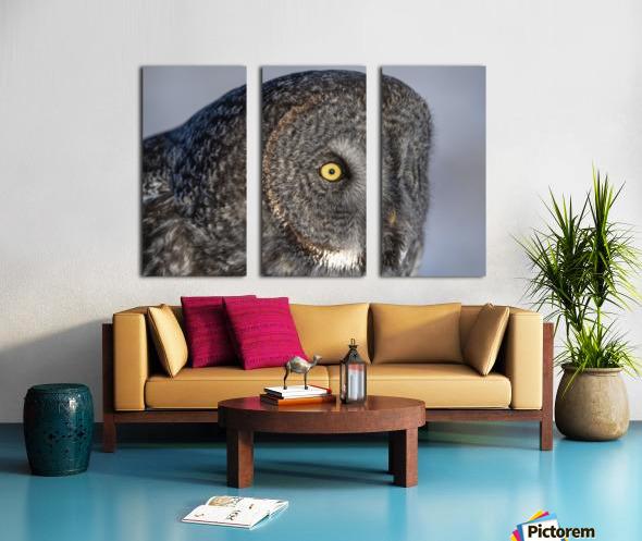Great Grey Owl up Close Split Canvas print