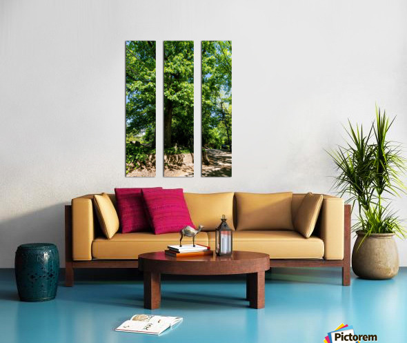 Tree Than Owns Itself   Athens GA 06567 Split Canvas print