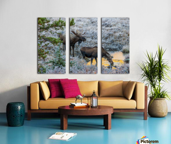 Moose On Golden Pond Split Canvas print