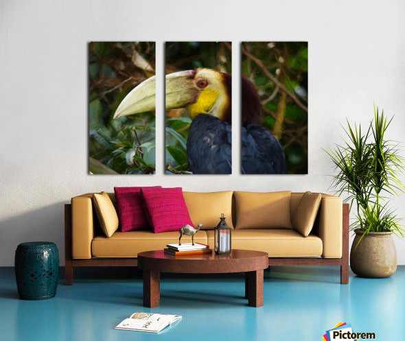 Toucan Split Canvas print