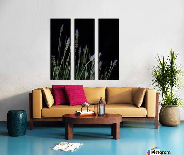 plant flower lavender black background Split Canvas print