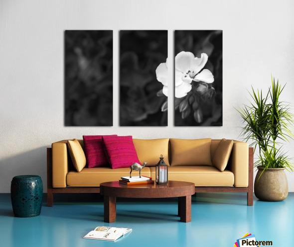 Blooming side flower B&W Split Canvas print