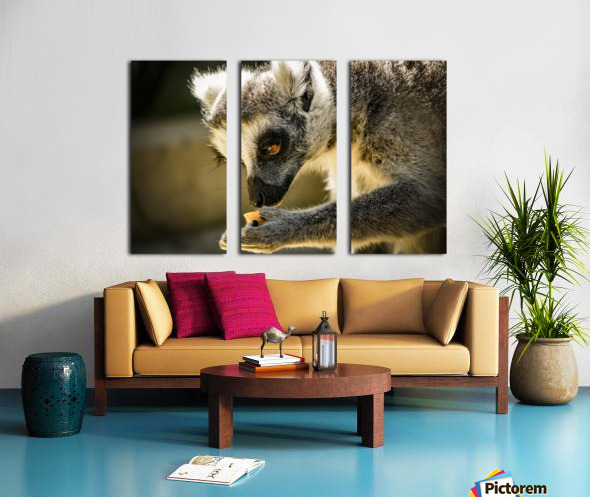 Ring-tailed lemur Split Canvas print