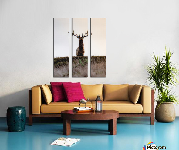 Tule Elk On Top Of A Hill Split Canvas print