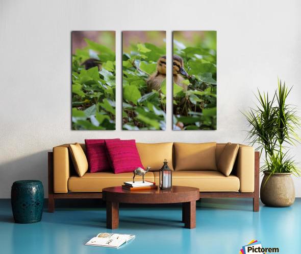 Duck In Plants Split Canvas print