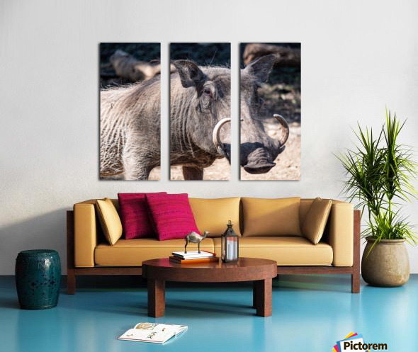 Warthog Close Up Split Canvas print