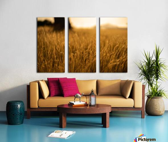 Golden Hour Field Split Canvas print
