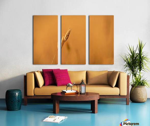 Golden Hour Grass Split Canvas print