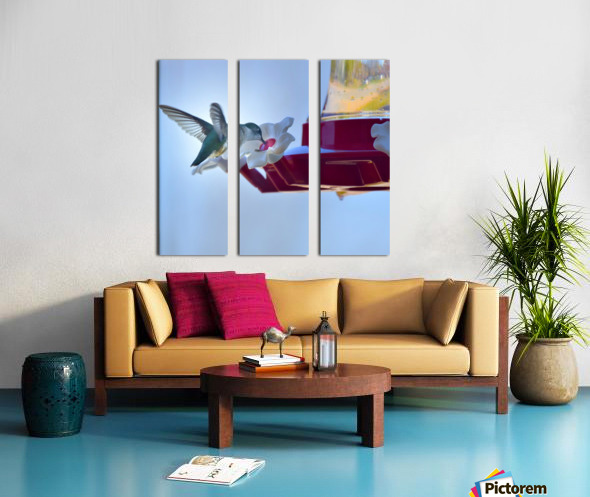 Oiseau-mouche Split Canvas print