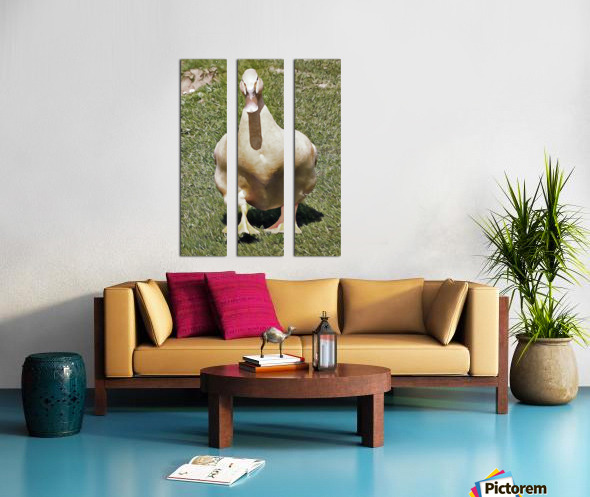 Buff Orpington Duck Split Canvas print