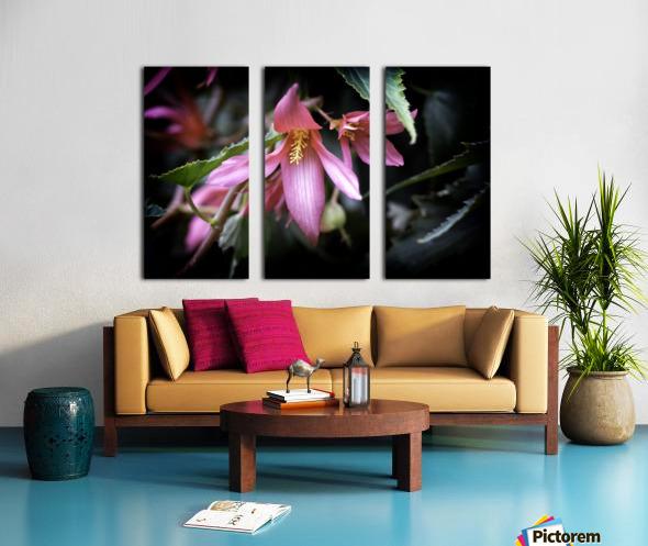 Begonia  Split Canvas print