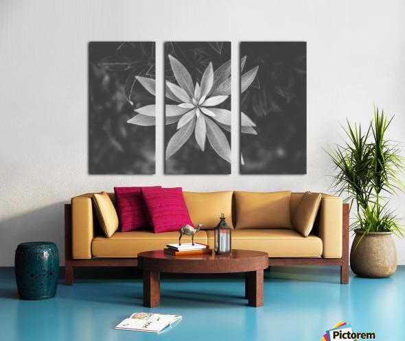 Symmetry of the nature Split Canvas print