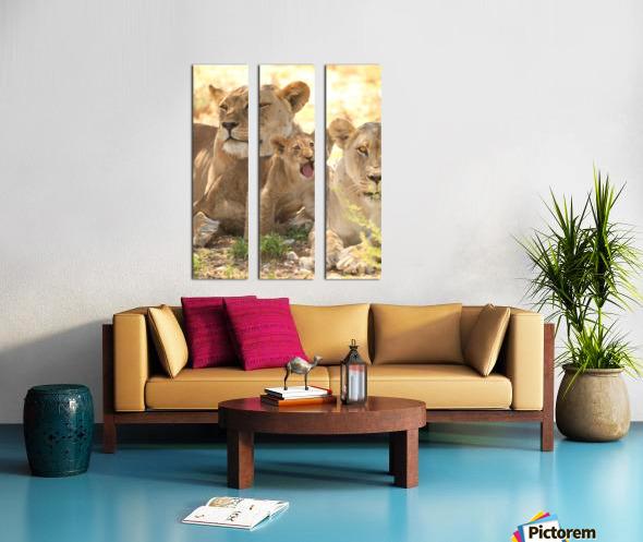 AdriaanPrinsloo 6659 Split Canvas print