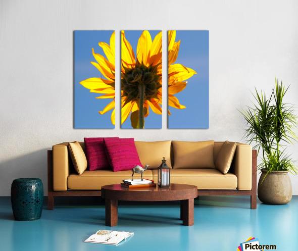 Glowing Heliopsis Split Canvas print