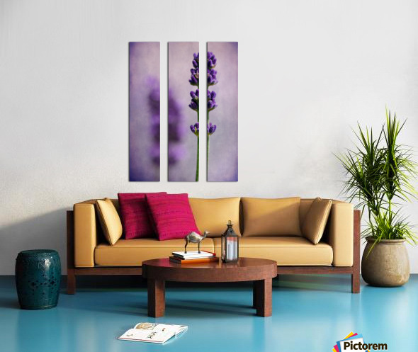 Lavender Split Canvas print