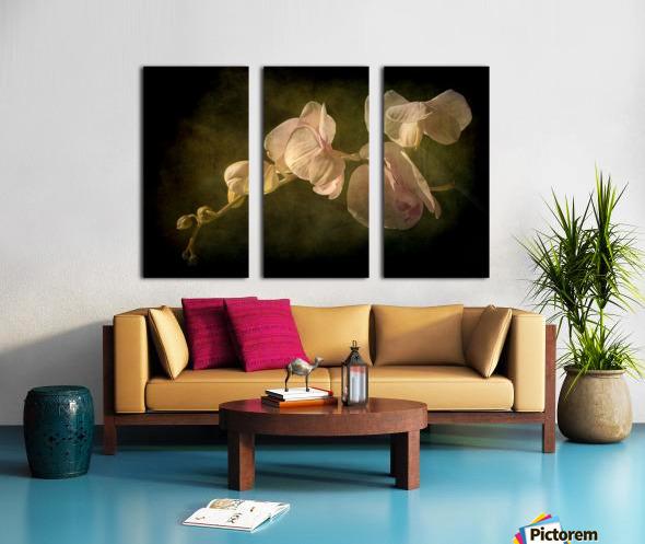 Orchid Split Canvas print